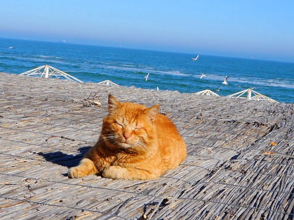 Рыжий кот греется под солнцем