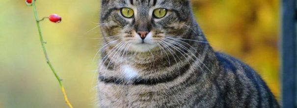 Полосатый кот и ветка ягод