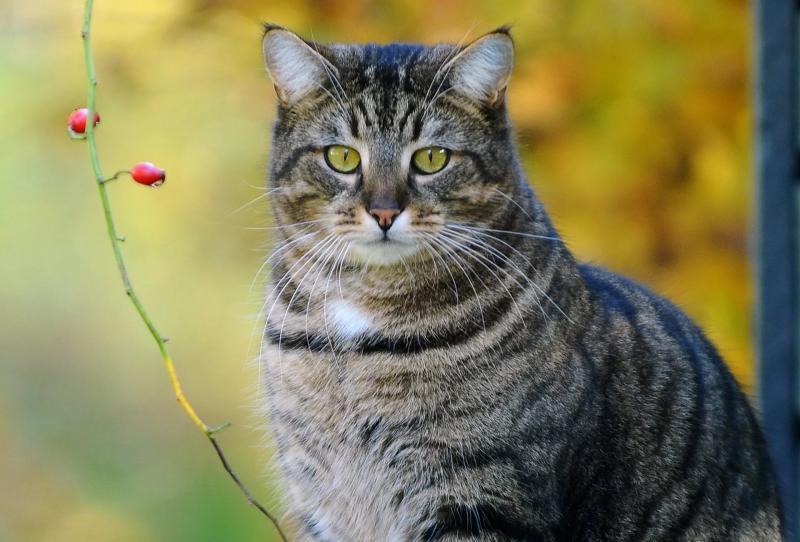 Причины перхоти у кошек: лечение и профилактика