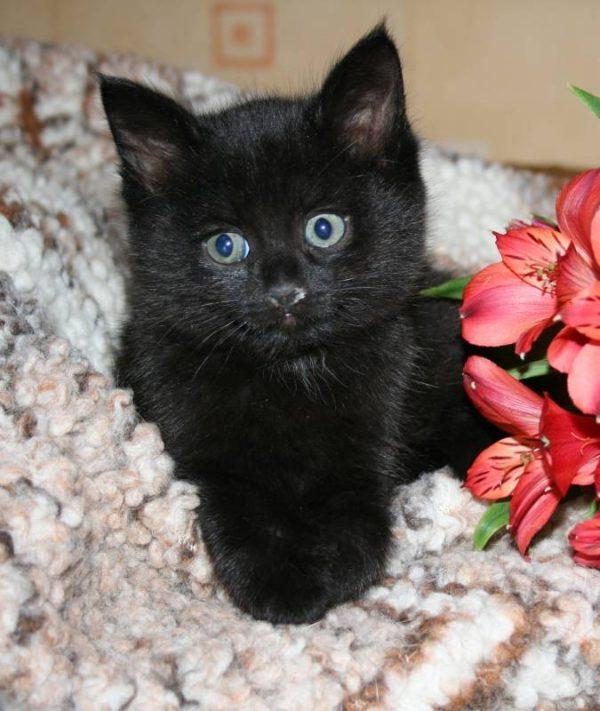 Чёрный котёнок