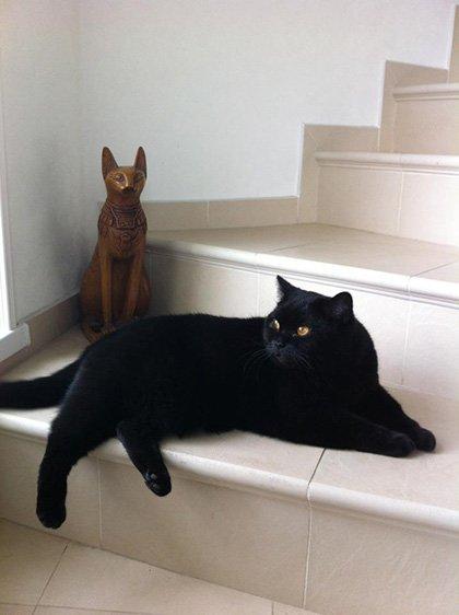 Чёрный британец на лестнице