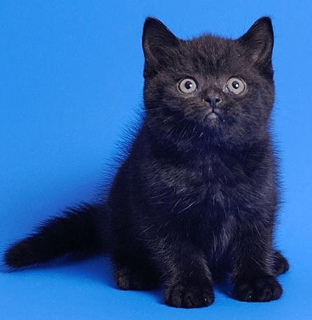 Черный котёнок сидит