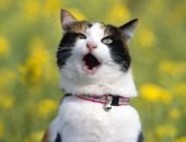 кот с препаратом секс-барьер