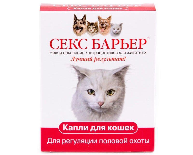 Побочные действия антисекса для кошек