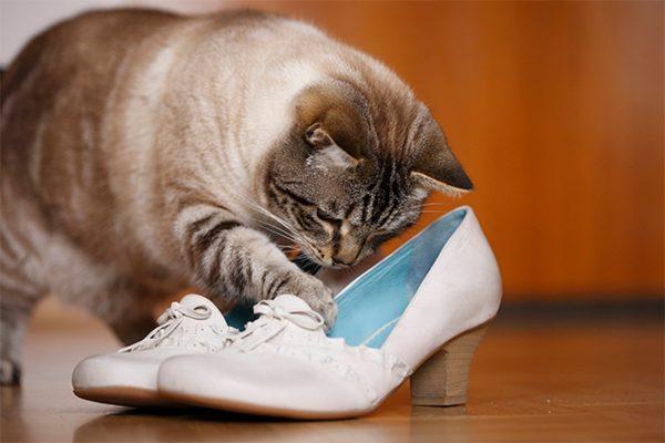Кот трогает и рассматривает обувь
