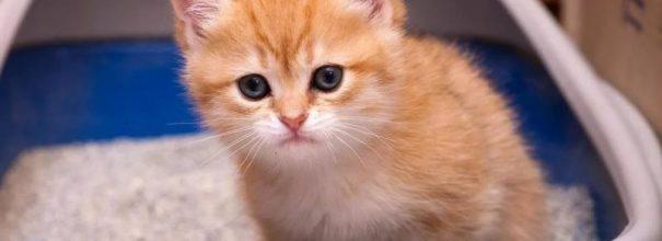 Котёнок сидит в лотке
