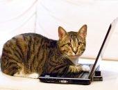 Кошка с ноутбуком