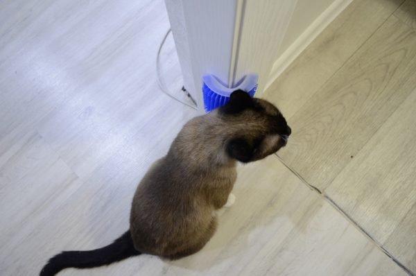 Кот и синяя чесалка