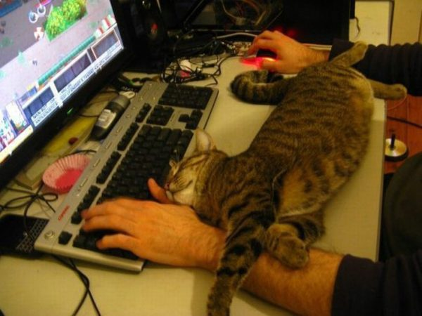 Кот спит у компьютера