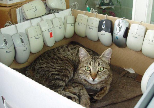 Кошка в коробке с мышками