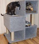 Две кошки в домике