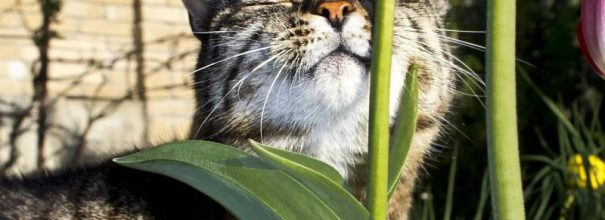 Кот нюхает стебель травы