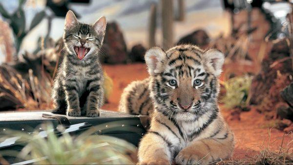 Котёнок и тигрёнок