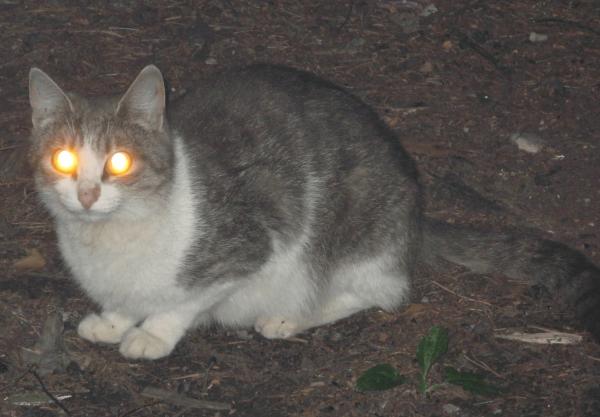 У кота светятся глаза в темноте