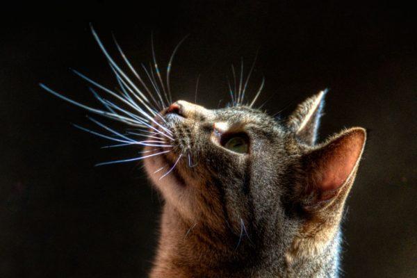 Кошачья морда с усами