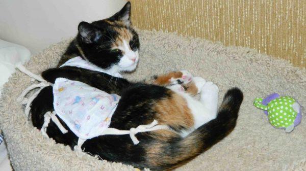 Кошка в попоне лежит на лежанке