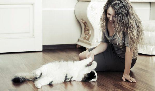 Девушка играет с кошкой