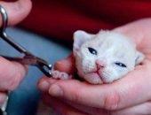 когтерез для кошки