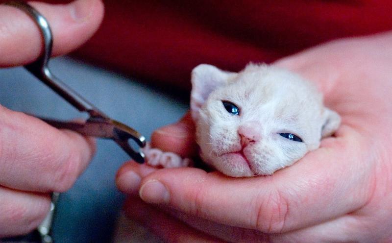 Ножницы для стрижки когтей кошки