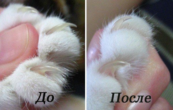 До и после обрезания кошачьих когтей