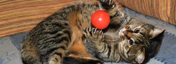 Кот играет с мячиком