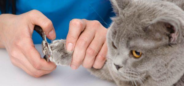 Кошке стригут когти