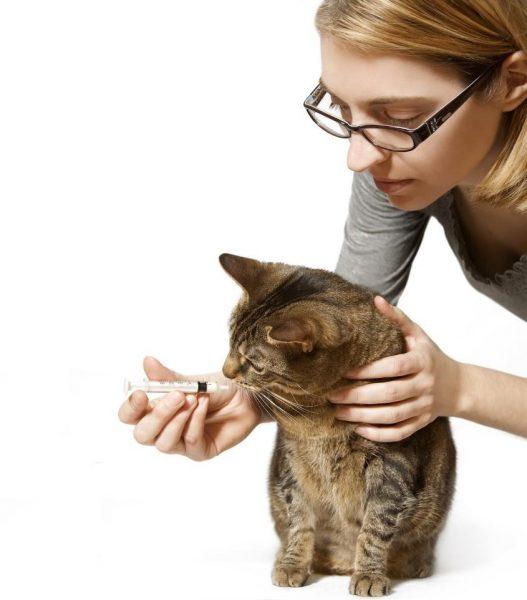 Кошке дают лекарство