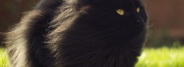 Чёрный пушистый кот сидит, обдуваемый ветром, и смотрит вверх