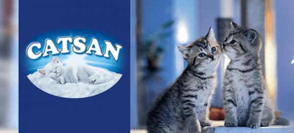 Catsan и котята