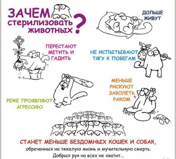 Плакат о преимуществах стерилизации