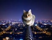 Сколько жизней у кошки