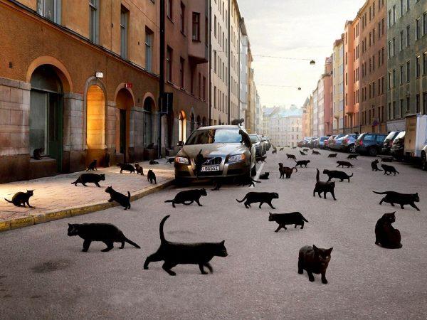 Множество чёрных кошек на городской улице