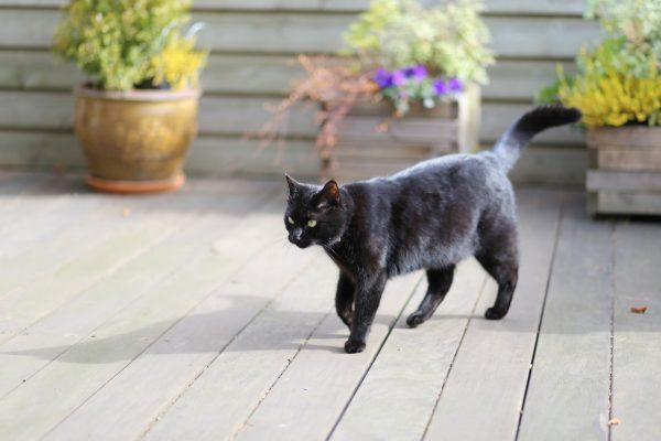 Чёрный кот идёт по террасе мимо цветочных горшков