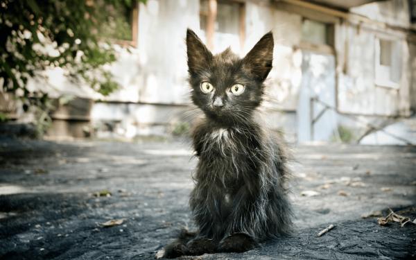 Бездомный чёрный котёнок с всклокоченной шерстью сидит на асфальте