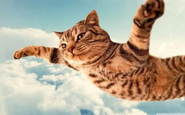 Кот в полёте