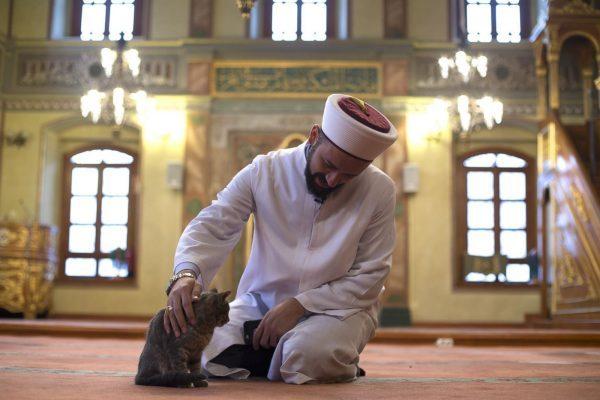 Мусульманин гладит кошку