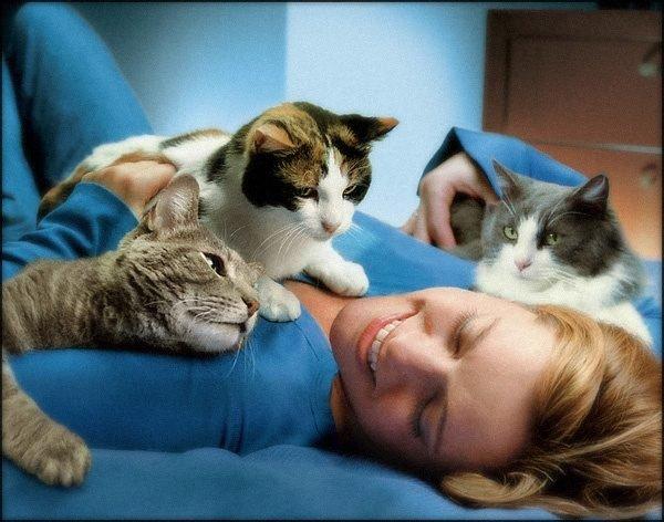Кошки лежат на хозяйке
