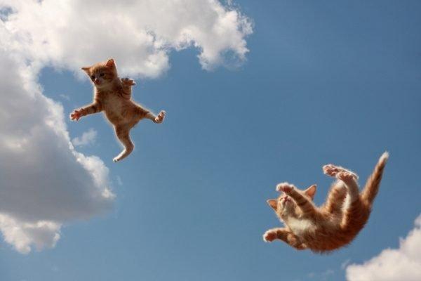 Падающие котята