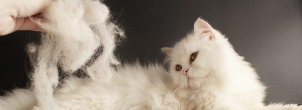 Линька у кошки