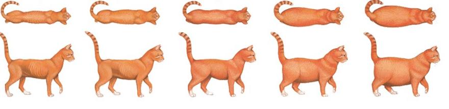 Резкое Похудение У Кошки Причины. Кошка похудела и сильно линяет, а ест хорошо: в чем причина
