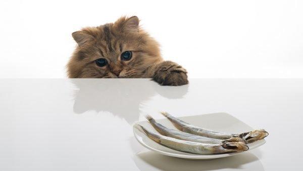 Кот смотрит на солёную рыбу, лежащую на столе