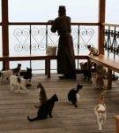 Кошки и монах
