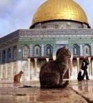 Кошки возле мечети