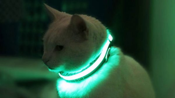 Кот в светящемся ошейнике