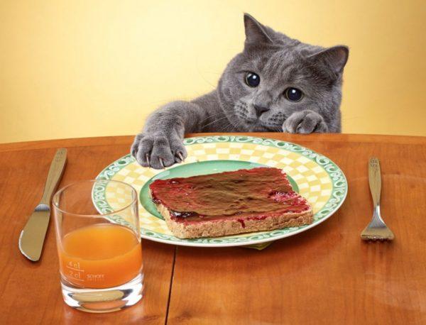 Еда «со стола»