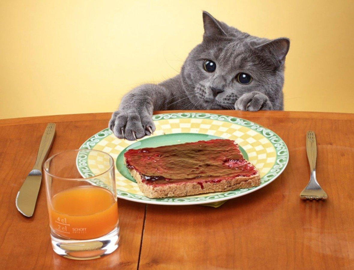 Картинки приколы, смешные картинки еды и животных