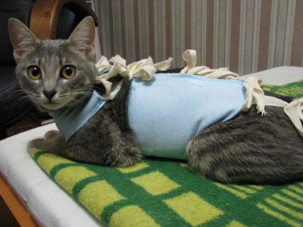 Кошка в попоне после стерилизации