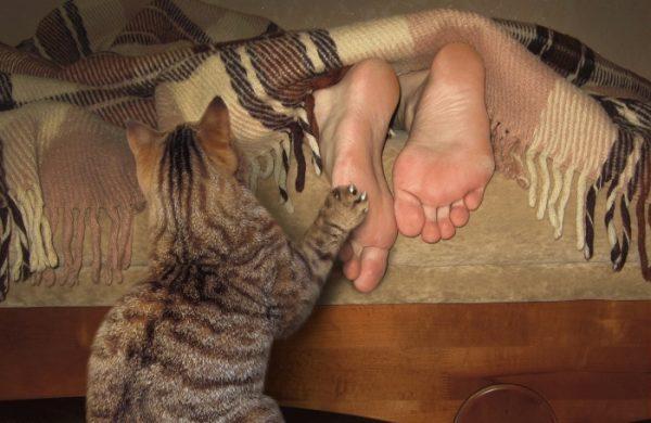 Кошка будит хозяина