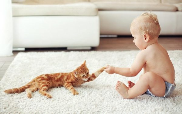 Кошка и ребёнок