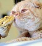 Кошка и игуана